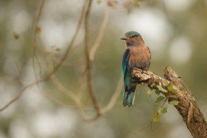 India Cruise Wildlife